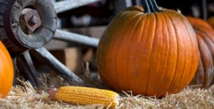 Autumn Dental Flex Plan Benefits