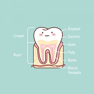 teeth change color